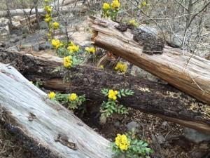 Oak Creek Canyon Logs