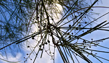 Sky and Twigs