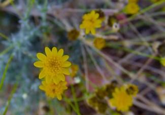 Yellow Flowers